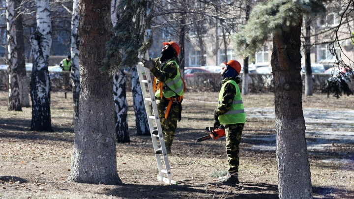 У памятника Ленину в центре Челябинска вырубят четыре ели и посадят вместо них новые деревья