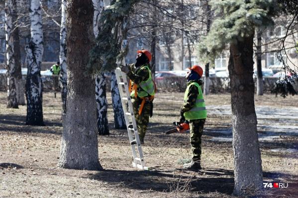 Обрезку деревьев начали с центра города