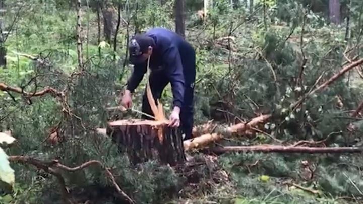 ФСБ нашла в «Кудряшовском бору» незаконную вырубку деревьев