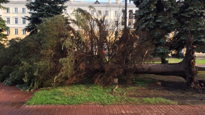 Ураган разнёс Металлургический район Челябинска. Вырванные с корнем деревья и посёлки без света