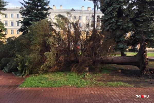 За считанные секунды непогода в Челябинске повалила деревья