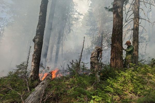 Пожар в заповеднике полыхает уже две недели