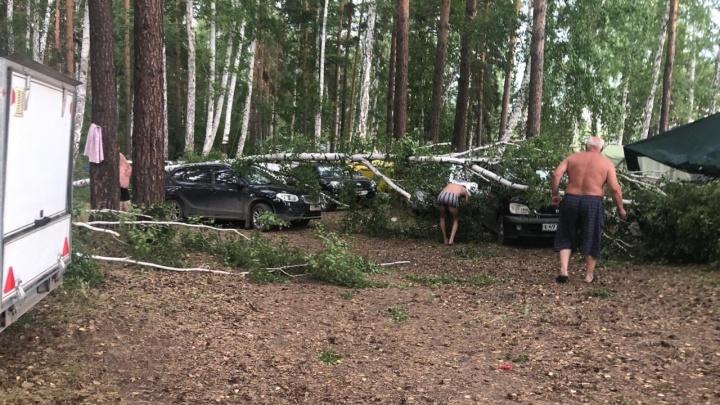 На Увильдах ураганный ветер повалил деревья на припаркованные машины
