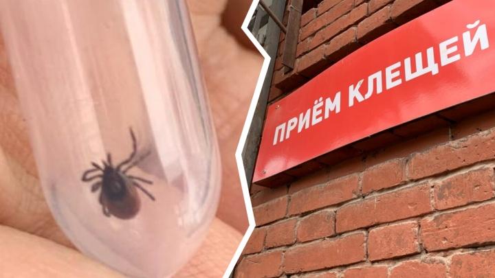 В Ярославле обследовали более тысячи клещей: треть из них оказались заражёнными