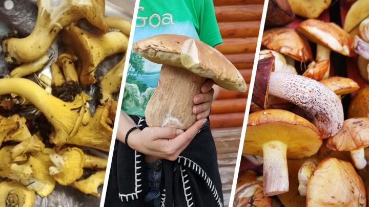 Уральцы рассказали, где собирали грибы этим летом