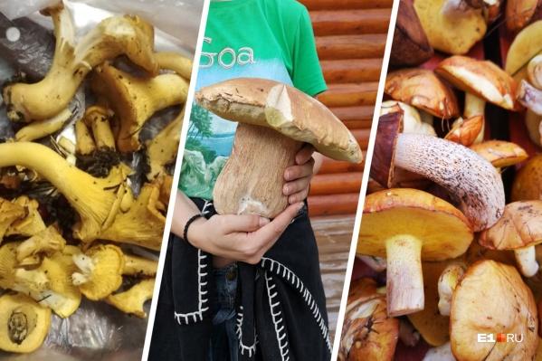 Уральцы этим летом смогли собрать много вкусных и полезных грибов