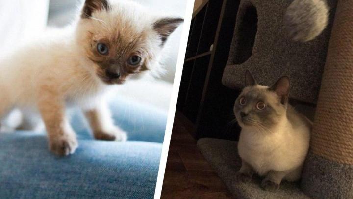 Год назад девушка, рискуя жизнью, спасла на дороге крошечного котёнка. Посмотрите, каким он стал!