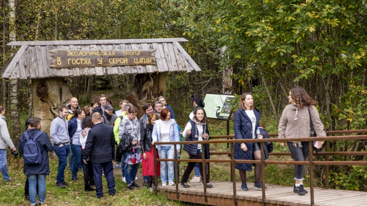 «Цапля серая — в камыши»: почему орнитологический маршрут на Плещеевом озере назвали местом силы