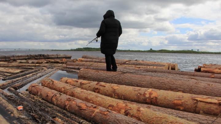 В Приморском районе ввели запрет на рыбалку сетями и неводами
