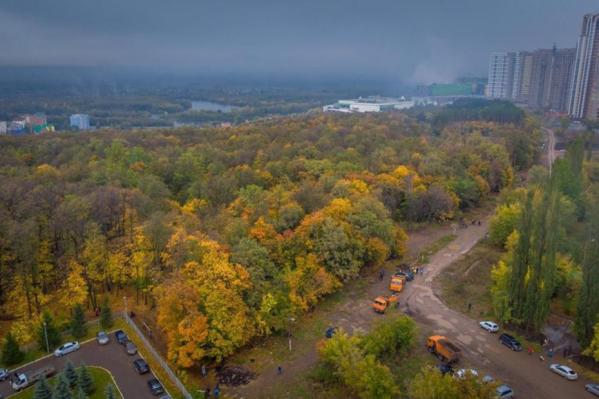 Чтобы остановить застройку леса, горожане решили создать петицию в адрес Радия Хабирова