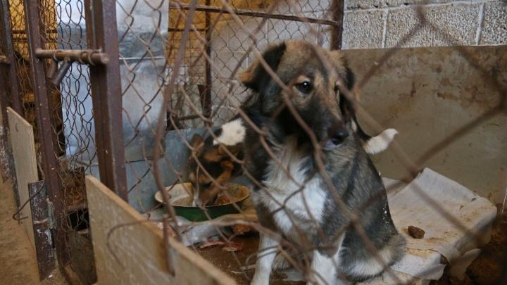 Уфа потратит почти 9миллионов рублей на отлов бродячих животных