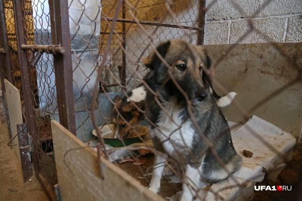Собак и кошек будут держать в приюте, а могут и отправить снова на улицу