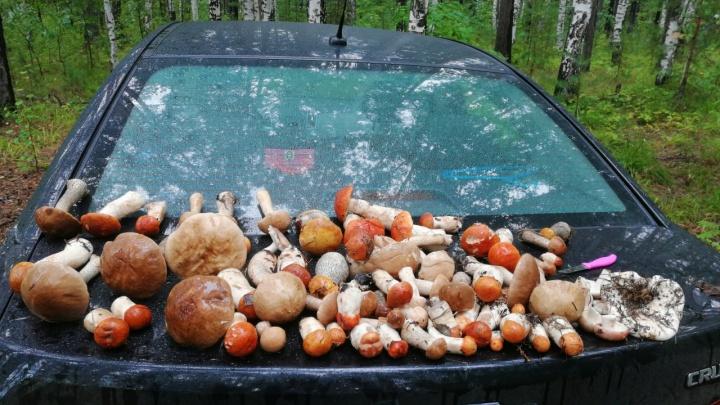 Это просто рай для грибников: смотрим, что и где нашли уральцы в лесах за выходные