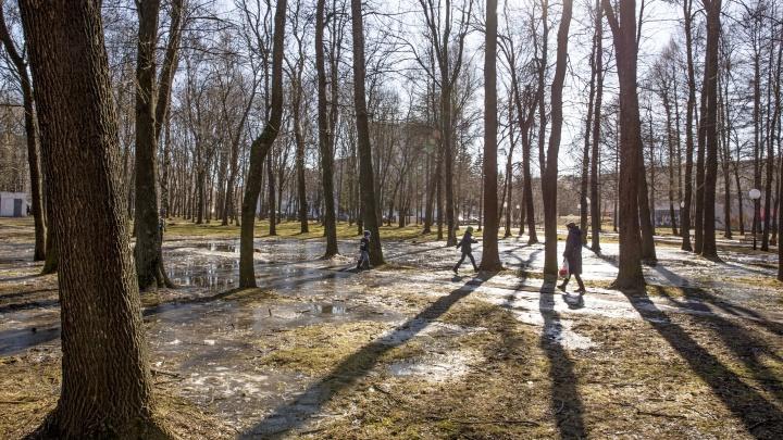 Наступила метеорологическая весна: что будет дальше с погодой в центре России