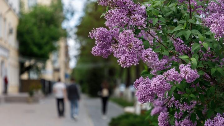 Волгоградскую область накроют грозовые дожди и штормовой ветер