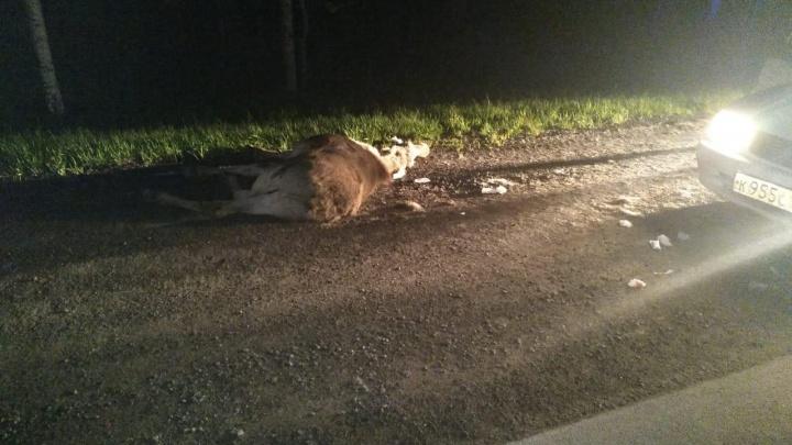 ДТП на тюменской трассе: лось выбежал под машину, в которой ехала семья с детьми