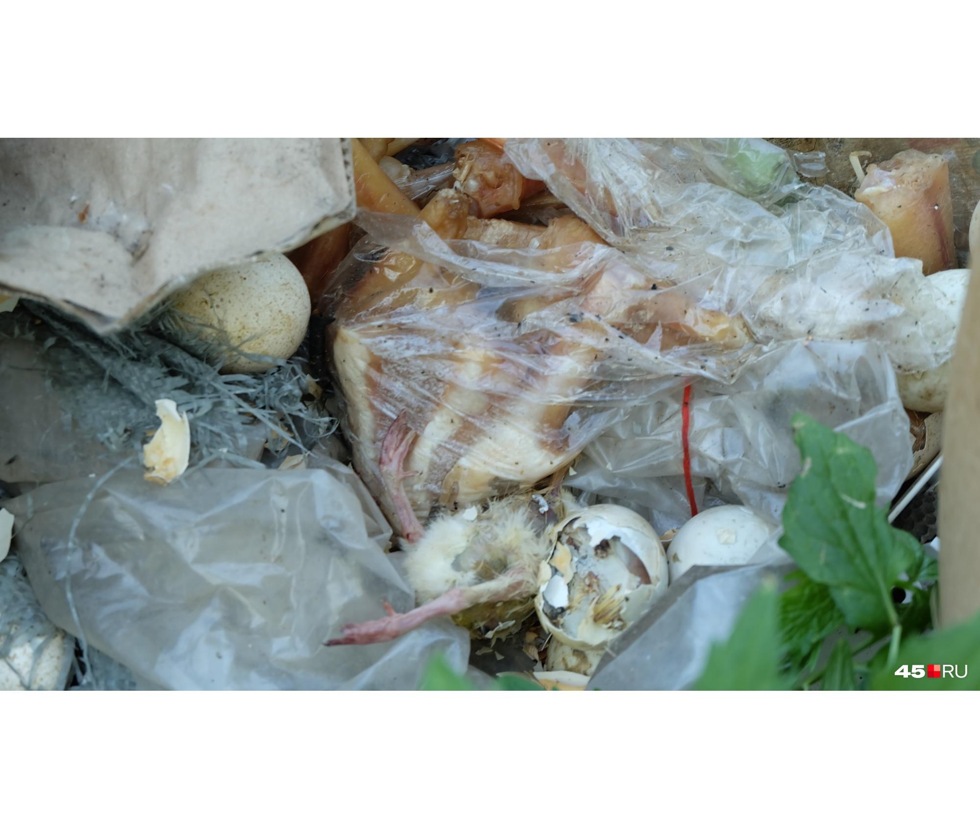 Едва вылупившиеся цыплята также оказались в горе отходов