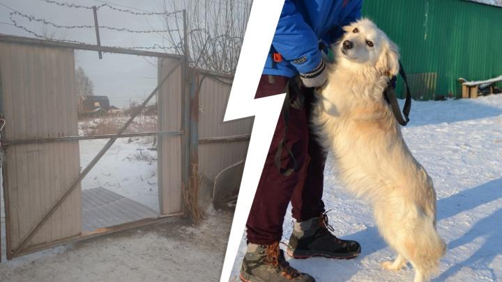 Выломали ворота и забрали волонтеров в отделение: в тюменский приют для животных нагрянули прокуроры