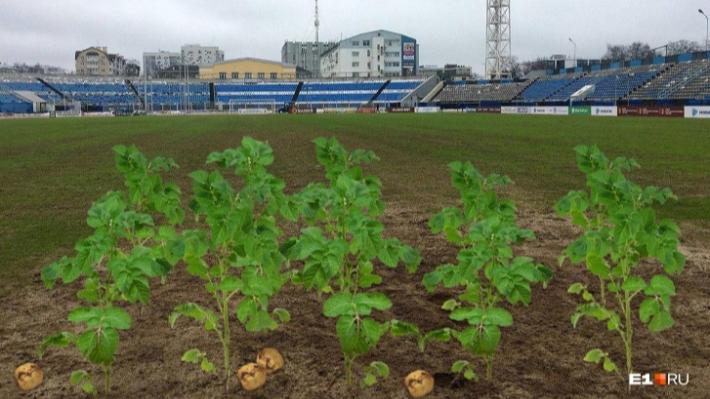 В Ярославле чиновники поняли, почему поле «Шинника» в таком ужасном состоянии. Но уже поздно