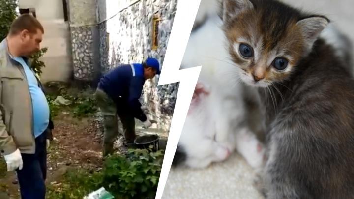 «Котят замуровали заживо!» В Екатеринбурге коммунальщики забетонировали подвал с животными