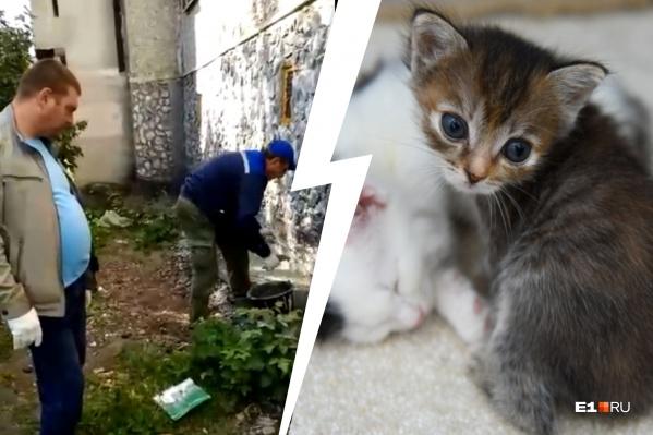 В подвале жилого дома заживо замуровали котят