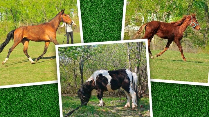 В Челябинске у владельца частной конюшни украли трёх лошадей