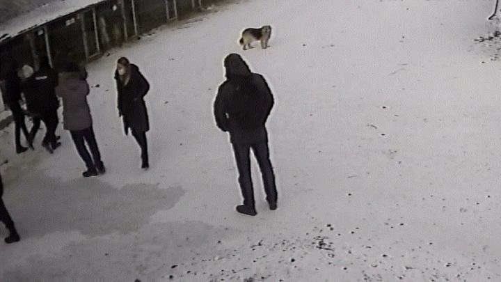 Задержание под прицелом телекамер: приют «Лучший друг» показал, как к ним пришли силовики с проверкой