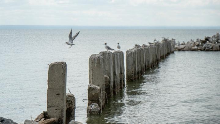 Голубой Залив: прогулка с НГС по приморским дачам с пляжем. Посмотрите на замок за 30 млн и рыжего кота