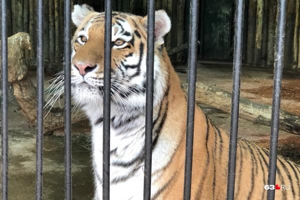 Кассандра любит внимание и подходит совсем близко к посетителям зоопарка