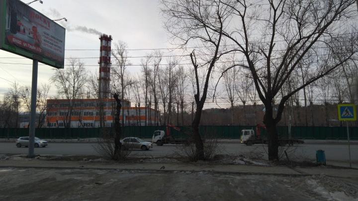 Челябинцы пожаловались на очередную обрезку деревьев рядом с рекламным щитом. Власти были не в курсе