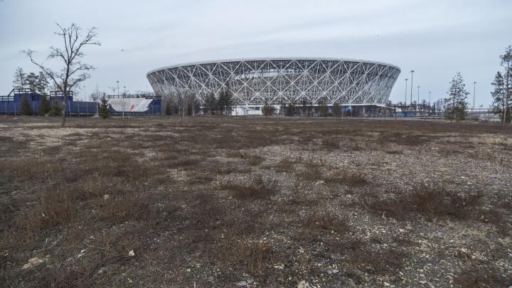 В Волгограде сменили директора вырубленного ЦПКиО. Хозяева остались прежними
