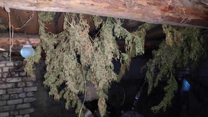 У нижегородца изъяли семь килограммов марихуаны. Он заявил, что ему для себя