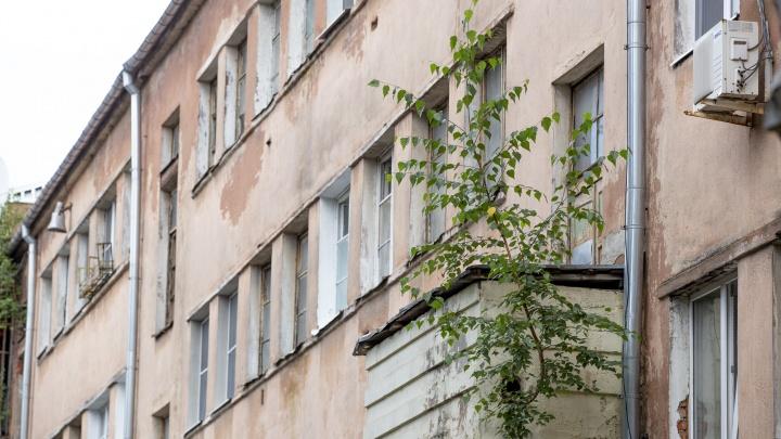 Даже на крыше мэра: в Ярославле на жилых домах выросли деревья