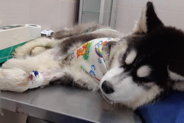 Оскар в больнице