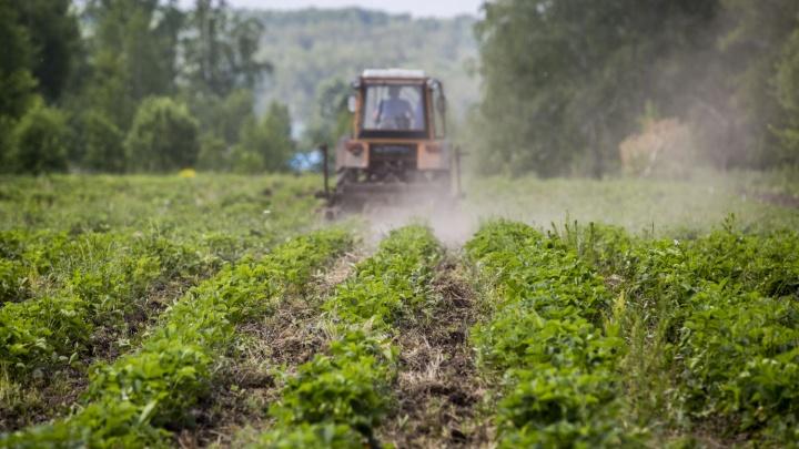 В Новосибирской области ввели режим ЧС из-за засухи