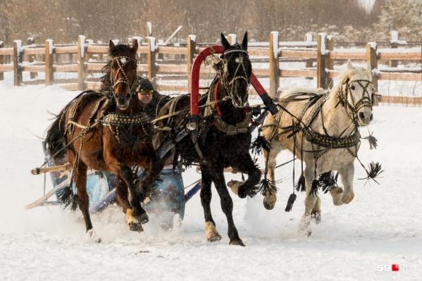 Русские тройки — главное украшение праздника в Усть-Качке. В Прикамье их можно увидеть только здесь