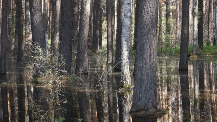 «Урон понесли целые экосистемы»: в крае затопило заповедник «Шушенский бор»