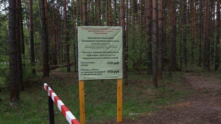 Прусовские карьеры в Ярославле стали платными: за что берут деньги