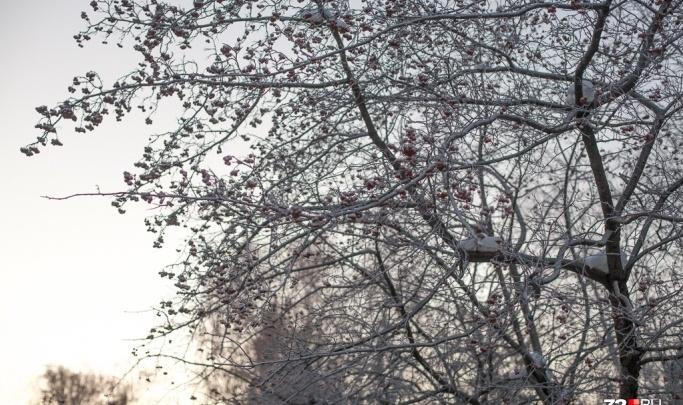 Снег возвращается: какая погода ждет тюменцев на неделе