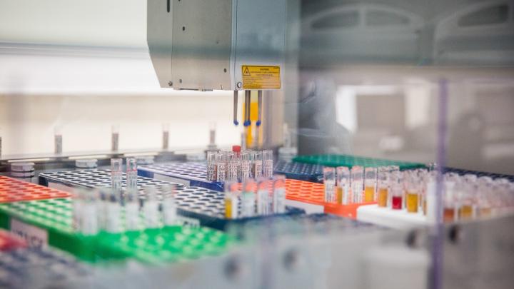 В Архангельской области тесты на коронавирус сдали около 280 человек