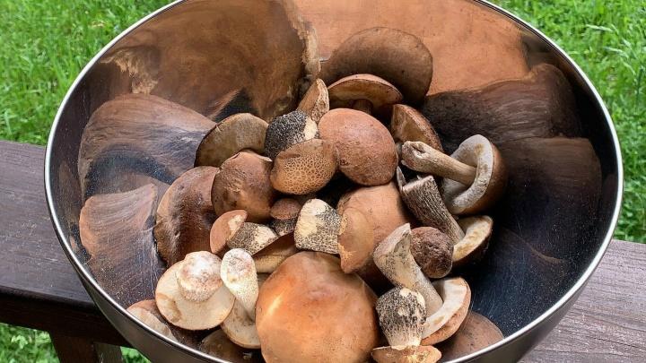 «Много белых и подберёзовиков»: где собирать грибы. Раскрыли 25 секретных мест