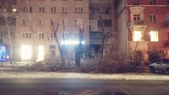 В мэрии рассказали, зачем в центре Новосибирска ночью спилили деревья на Советской