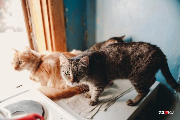 В клинике предлагали лечение от коронавируса для кошек, хотя способов оказать помощь животным ещё нет