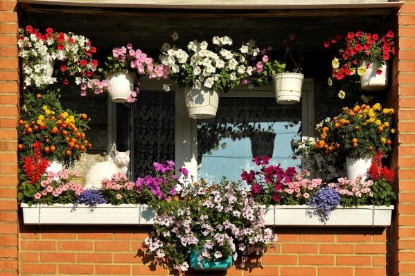 Летом на некоторых балконах страны появляются шикарные цветники