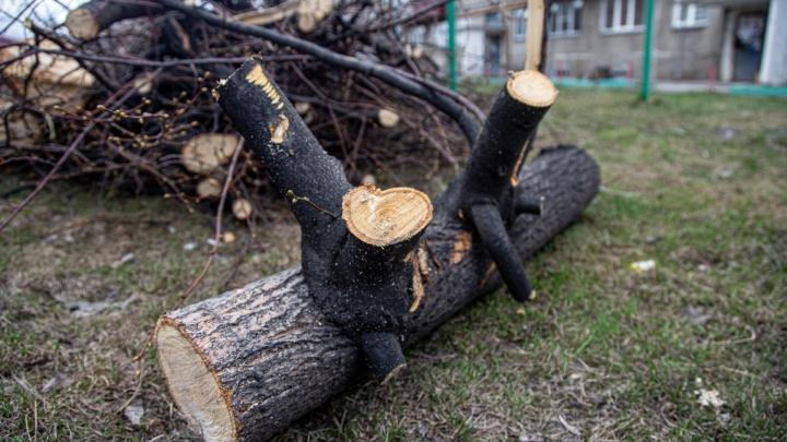 «За секунду исчезло всё»: во дворе дома в Челябинске вырубили деревья, чтобы сделать красиво