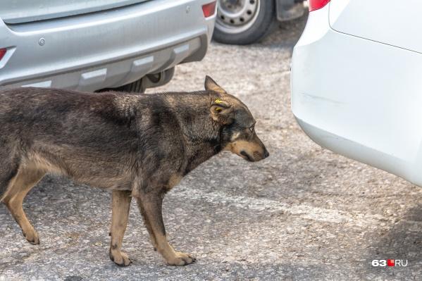 Бездомных животных будут стерилизовать и чипировать