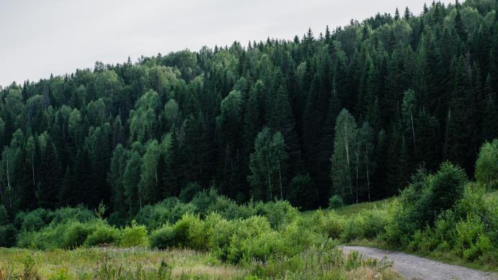 В Прикамье спустя трое суток нашли потерявшегося в лесу 77-летнего грибника