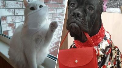 «Хозяин, когда ты уйдешь на работу?»: лучшие фото котов на самоизоляции
