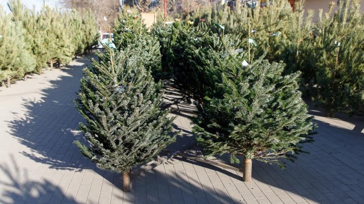 В Волгограде отслужившие новогодние елки пустят на доброе дело