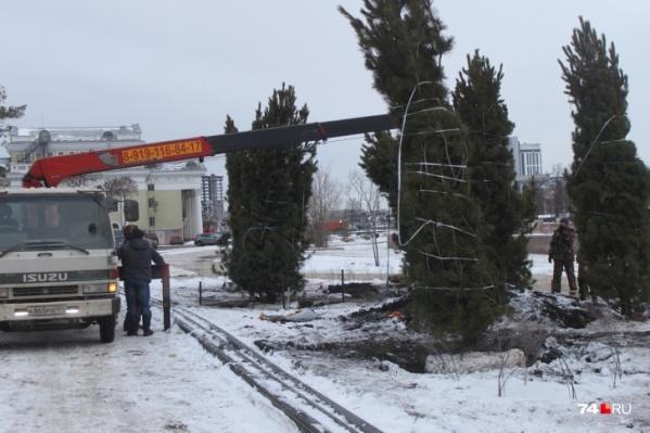 До конца ноября в Челябинске планируют высадить более трёх тысяч крупных деревьев